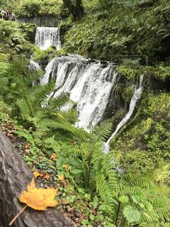 森の中の大きな滝の写真・画像素材[1451721]