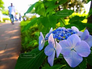 近くの花のアップの写真・画像素材[1385525]