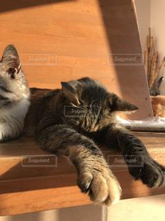 グデ猫の写真・画像素材[1381821]