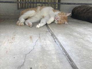 猫,福井,夏バテ,お誕生寺