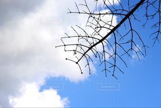空,晴れ,北海道,天気,一眼レフ,秋空