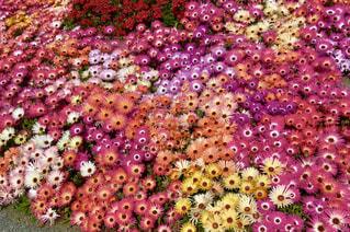 近くに紫の花のアップの写真・画像素材[1399476]