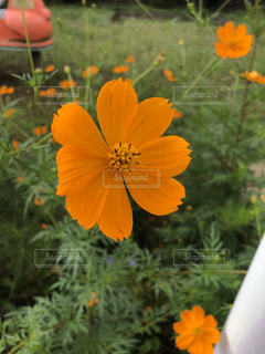 近くの花のアップの写真・画像素材[1457229]