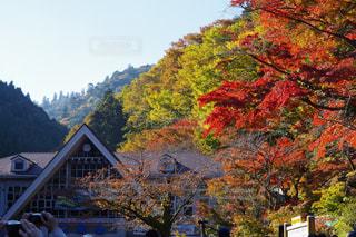 紅葉,観光,イチョウ,銀杏,ハイキング,高尾山,八王子,ケーブルカー,モミジ