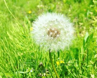 旅立ちの春の写真・画像素材[1417242]
