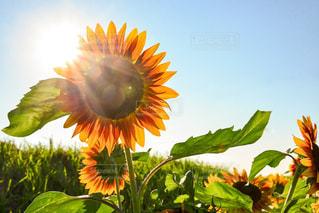 夏の花の写真・画像素材[1384493]