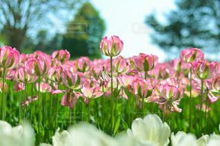 近くの花のアップの写真・画像素材[1385896]