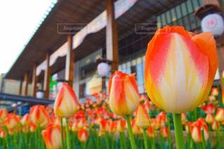 春のお出迎えの写真・画像素材[1394193]