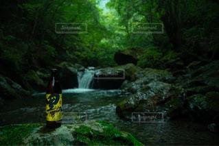 自然の恵み、黒伊佐錦。の写真・画像素材[1443883]