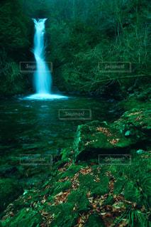 深緑の世界の写真・画像素材[1454418]
