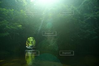 日光浴の写真・画像素材[1455740]