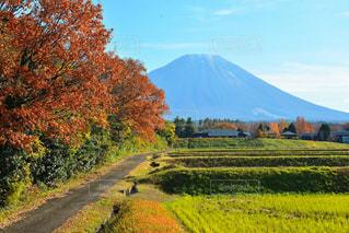 秋空に霞む大山の写真・画像素材[1501472]