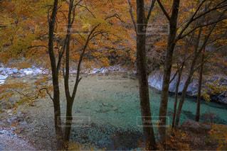 秋の色の写真・画像素材[1598892]