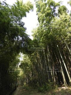 竹の道の写真・画像素材[3141868]