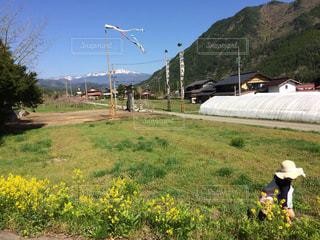 お散歩コースのワラビ採りの写真・画像素材[1429384]