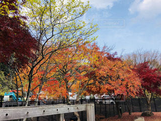 公園を彩る紅葉の写真・画像素材[1649924]
