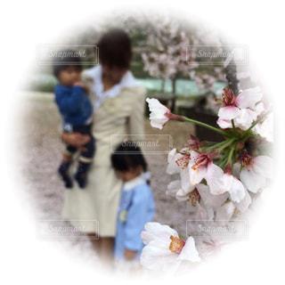 3人で頑張る誓いの春の写真・画像素材[1655741]