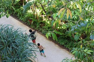 屋外,プール,リゾート,熱中症対策