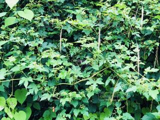 近くの緑豊かな緑の森の写真・画像素材[1393394]