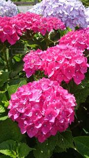 近くの花のアップの写真・画像素材[1410241]