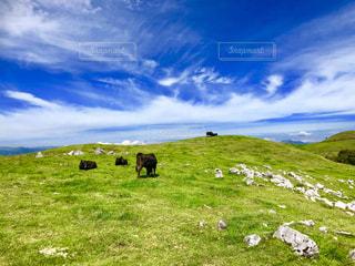 牛と空の写真・画像素材[1465344]