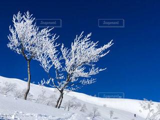 雪に覆われた斜面で空中を飛んでいる男の写真・画像素材[2835555]