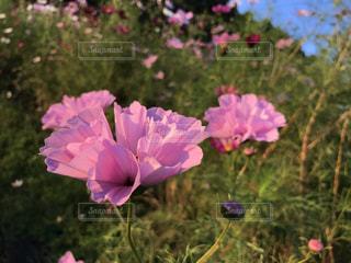 植物にピンクの花の写真・画像素材[1392200]