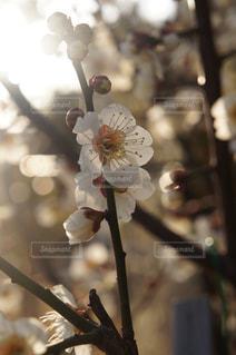 近くの花のアップの写真・画像素材[1392325]