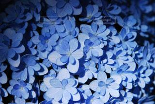 小さな花びらたちの写真・画像素材[1395429]