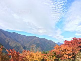 空,秋,紅葉,屋外,景色,光,山脈,秩父,秋空,日中