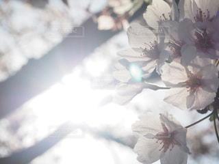 花のぼやけた画像の写真・画像素材[1415311]