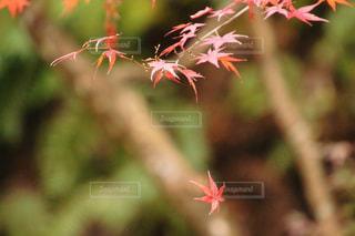 近くの花のアップの写真・画像素材[1629396]