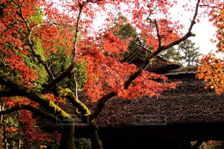 近くの木のアップの写真・画像素材[1629407]