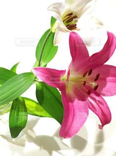 紫色の花一杯の花瓶の写真・画像素材[1389694]