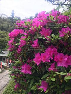 植物にピンクの花の写真・画像素材[1395041]