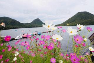 湖,ピンク,コスモス,ボート,山,秋桜,湖畔