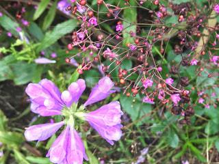 公園で見つけたピンクの花の写真・画像素材[1446093]