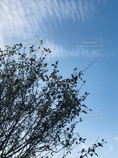 秋空の写真・画像素材[1465245]