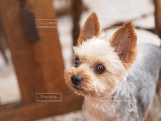 犬の写真・画像素材[44010]