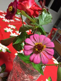植物の赤い花の写真・画像素材[1391967]
