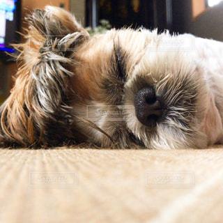 リラックス寝顔の写真・画像素材[1644845]