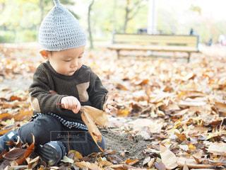 葉っぱが大好きなどんぐりくんの写真・画像素材[1628487]