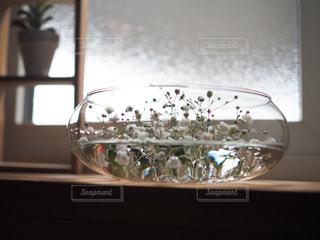 インテリア,花,かすみ草,白,花瓶,ホワイト