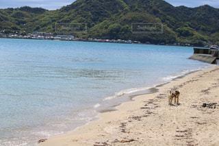 折古の浜の写真・画像素材[1395466]