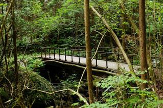 山道の橋の写真・画像素材[1404641]