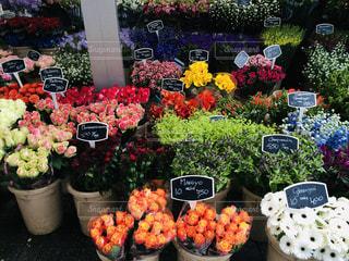 アムステルダムの街角の花屋さんの写真・画像素材[1541400]