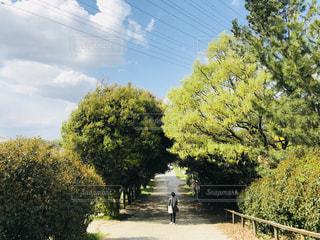 自然の写真・画像素材[1402990]