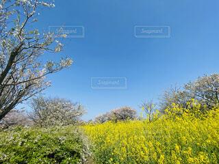 春の写真・画像素材[4299103]