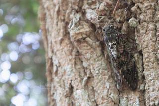 木の枝にとまった鳥の写真・画像素材[1427264]