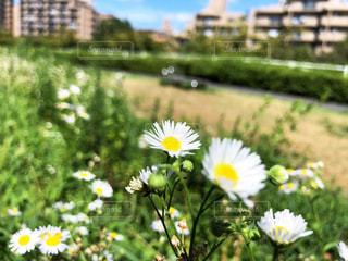 主張なき街角の花の写真・画像素材[1414752]